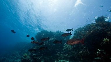 ryby na tle rafy
