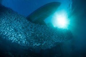 Stado ryb pod wodą