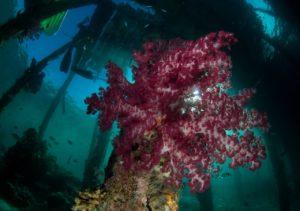 koralowiec pod wodą