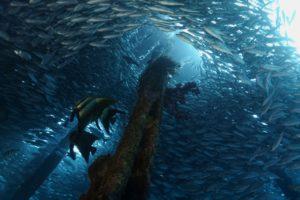 Wir z ryb pod wodą
